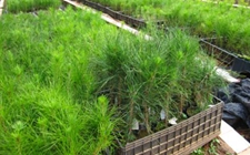 <b>浙江:林木育种取得阶段性成果 重点树种良种选育成效明显</b>