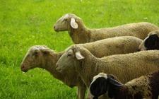 农业部:提高兽药产品质量安全水平 保障畜牧养殖业生产安全