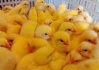 2月5日北上广鸡蛋行情 普遍呈现上涨趋势