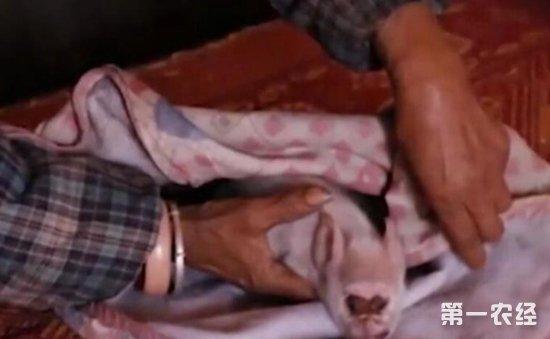 """真奇特!贵州一村民家母猪产下怪脸""""猴猪仔""""引众人围观"""