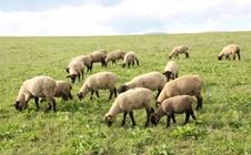 2018年俄罗斯国际粮食谷物加工及畜牧展览会的时间、地点及详情
