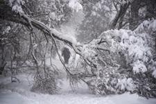<b>莫斯科百年来最大降雪致一人死亡多人受伤</b>