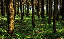 湖南:以林业现代化为总方向 着力培育森林旅游等三个千亿级产业