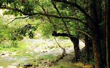 <b>安徽:2017年林业总产值达3611.87亿元 共完成造林148.44万亩</b>