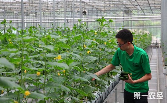 农业部公布第二批数字农业建设试点  大力发展数字农业