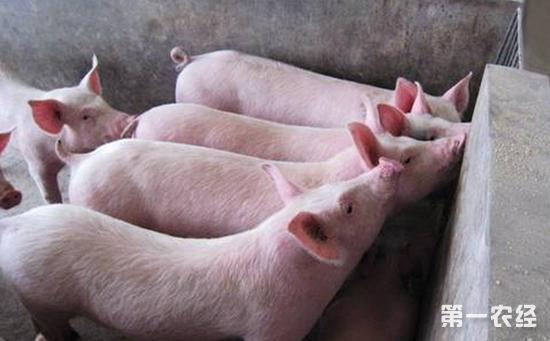 全国多省生猪价格回落  生猪价格走势继续震荡下跌