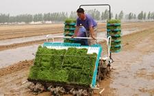 2018年春耕生产将调减1000万亩水稻
