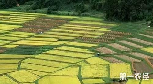 种植结构调整:抓好轮作休耕试点 全国轮作休耕2400万亩