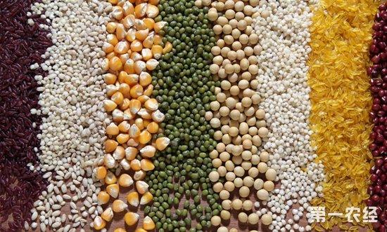 我国粮食产量登新台阶 高质量发展成主攻方向