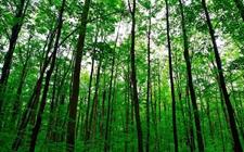 江苏省林业有害生物发生趋势会商会召开 累计防治2266.5万亩次