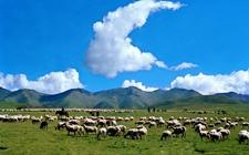 "<b>青海:农牧业初步实现""三生""良性循环 为精准扶贫提供有力支撑</b>"