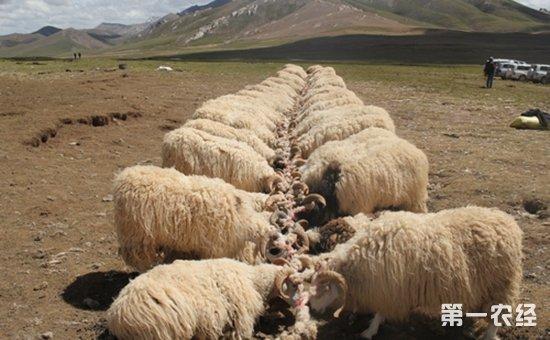 2018年中央一号文件中关于畜牧养殖业有哪些重点内容?