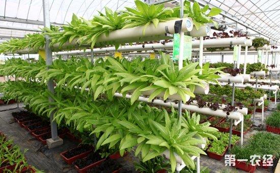 宁夏:农业物联网技术试验示范获得成功  全面实现水肥一体化项目