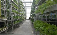 <b>宁夏:农业物联网技术试验示范获得成功 全面实现水肥一体化项目</b>