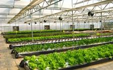 中英农业科技合作呈现多元化、多层次、多领域良好态势