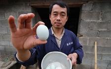 37岁孝子养鸡创业想让母亲过上好日子