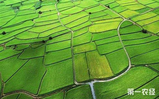 """农业部启动""""农业质量年""""行动 支持福建发展高质量农业"""