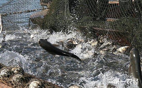韩国获增南太平洋区域的捕鱼配额