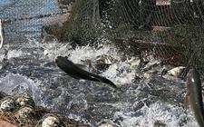 <b>韩国获增南太平洋区域的捕鱼配额</b>