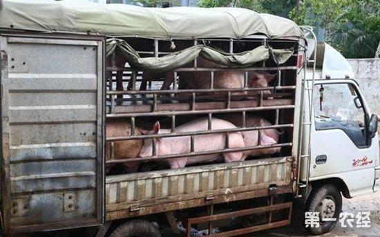 2018年2月7日部分地区生猪价格行情