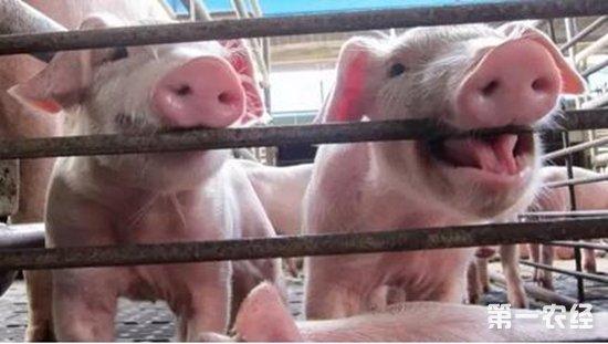 猪不仅咳嗽还发热的疾病有哪些?