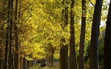 <b>2018年西藏计划造林110万亩以上 加快推进林业产业发展</b>