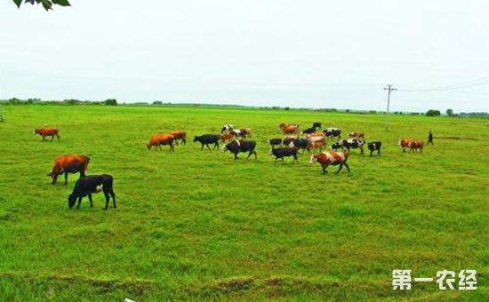 河南:构建现代畜牧业产业体系  促进畜牧业向智能化转型升级