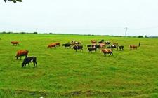 <b>河南:构建现代畜牧业产业体系 促进畜牧业向智能化转型升级</b>