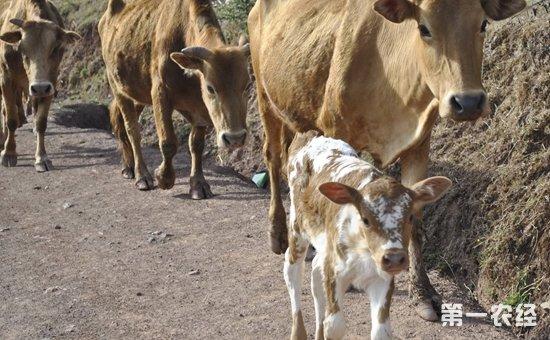 云南元阳:2017年畜牧业产值首次突破16亿元  大力发展标准化养殖