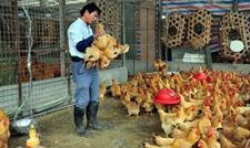 开发区疾控中心近日发出提醒远离活禽