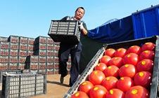 农资市场如何发展?农资经销商们必须要知道的那些事!