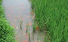 广西发展生态种养业 水产品占养殖总产量近七成