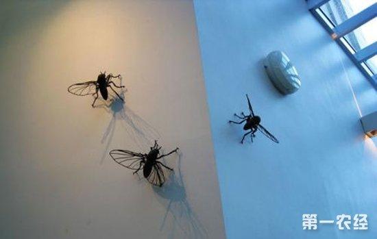 昆虫专家为新西兰夏季滋生大量苍蝇支招