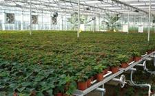 <b>山东东营:建设林业种苗花卉项目工程 将新发展林业育苗1万亩</b>