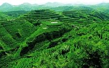 内蒙古:2018年争取造林1000万亩以上 持续推进天然林资源保护
