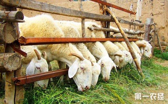 河南郑州:加快推进废弃物资源化利用  推动畜牧业绿色发展