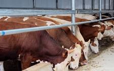 <b>河南郑州:加快推进废弃物资源化利用 推动畜牧业绿色发展</b>