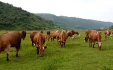 东乌旗扎实推进畜牧业供给侧改革 助力畜牧业现代化发展
