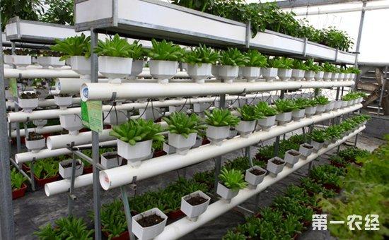 宿州埇桥:加快农业科技和信息化建设步伐  助推现代农业蓬勃发展