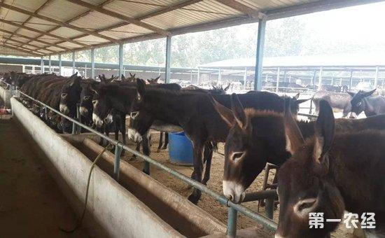 肉驴养殖怎么育肥?肉驴的育肥技术