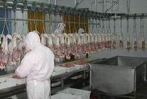 美国动物福利组织反对家禽检验屠宰产线提速