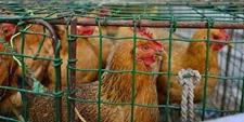 <b>黄浦区市场监管局处置私售活禽商贩 严厉打击违法售卖活禽行为</b>