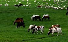 2018马来西亚国际家禽畜牧产业展的时间、地点及详情