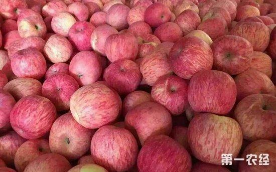 六旬果农万斤苹果滞销 爱心人士帮挽回8000元损失