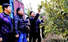 广东惠州:天气回暖 农技专家指导农民给农作物补营养