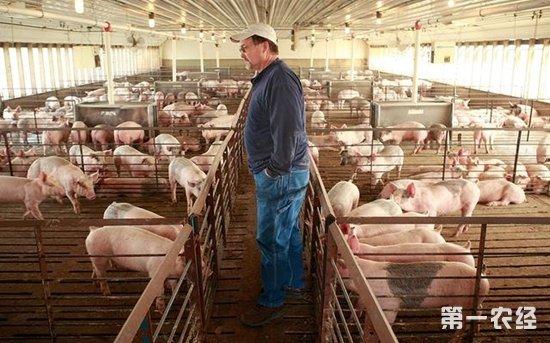 中国猪肉进口量逐年下降 美国、欧盟等国竞争愈演愈烈
