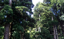 福建省召开林业工作视频会议 切实提高林业发展质量