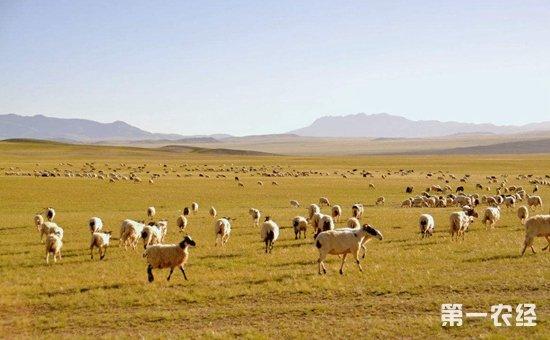 """西藏拉萨:开展""""南草北牧""""联动高原  破解畜牧业区域发展不平衡问题"""