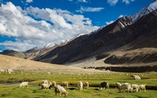 "<b>西藏拉萨:开展""南草北牧""联动高原 破解畜牧业区域发展不平衡问题</b>"