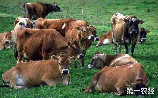 河南:以乡村振兴战略统领产业发展  高质量推进畜牧业转型升级